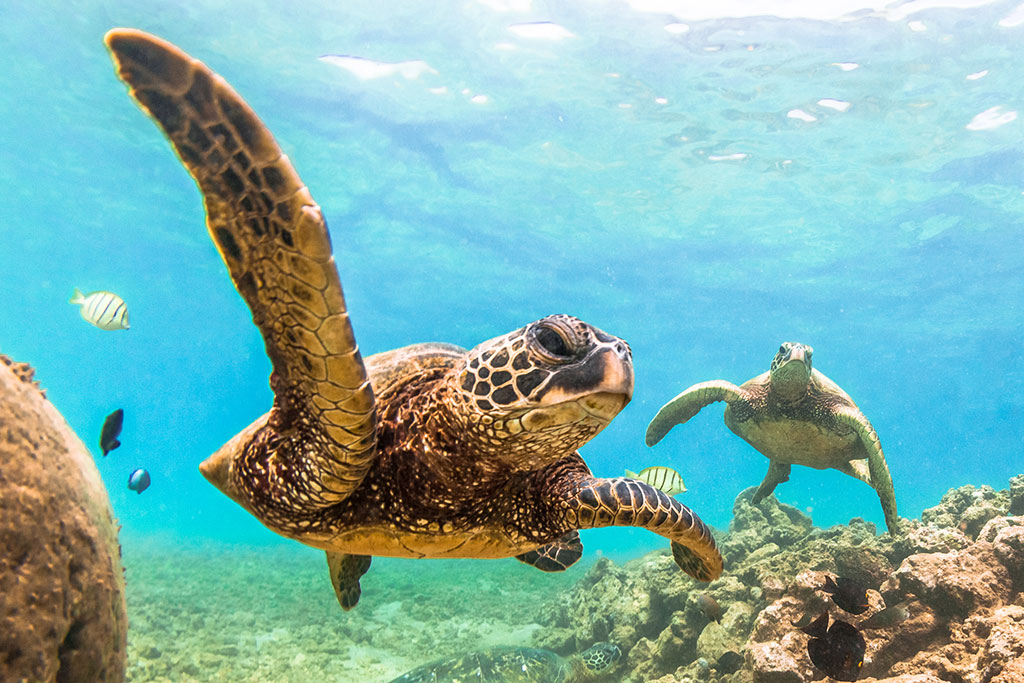 Best Hawaiian Island For Beaches And Snorkeling