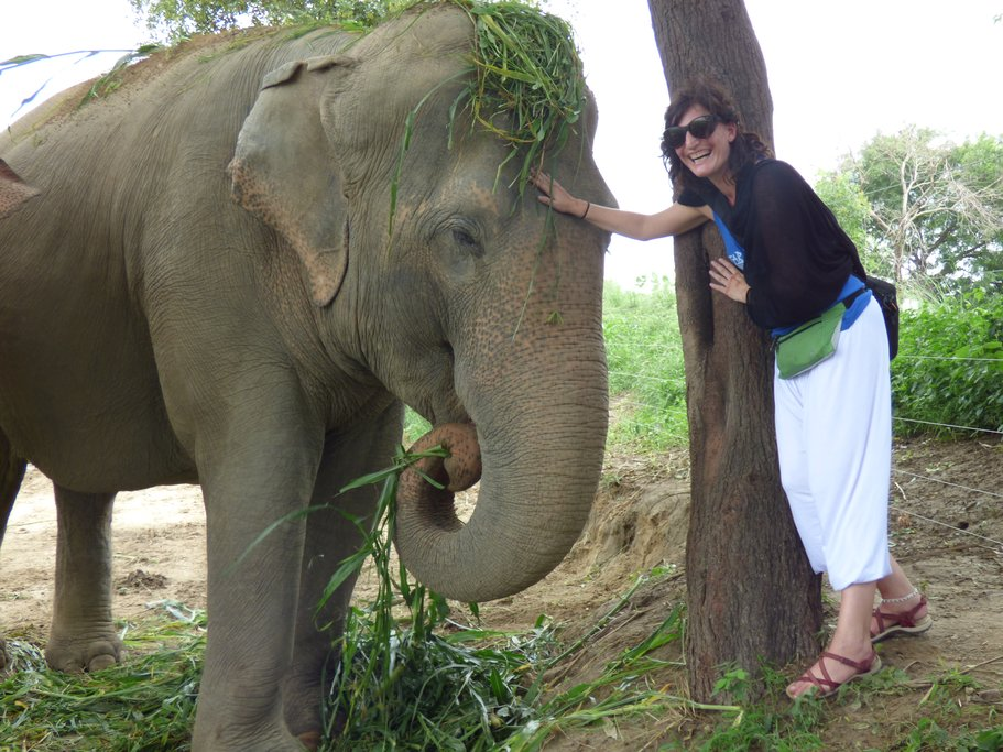 Elephant rescue center, near Agra