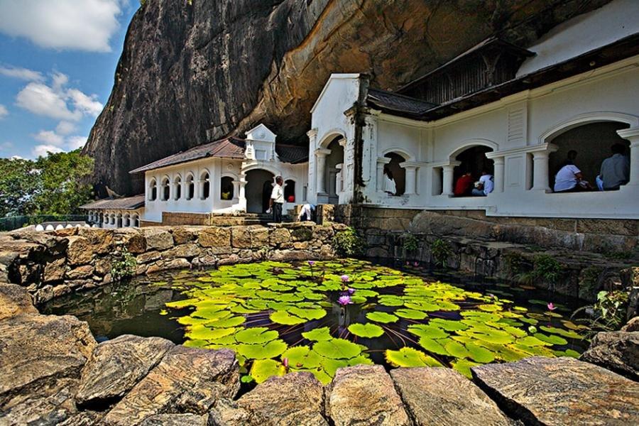 Lily pads in Dambulla