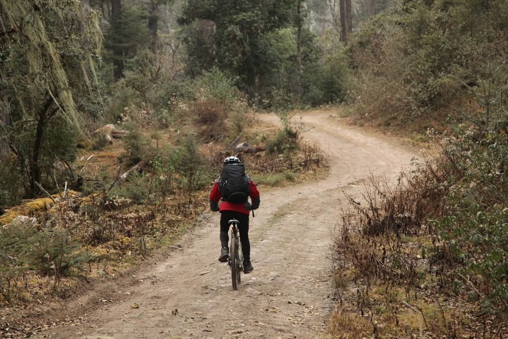 Bike through the forests to get to Khotokha Valley