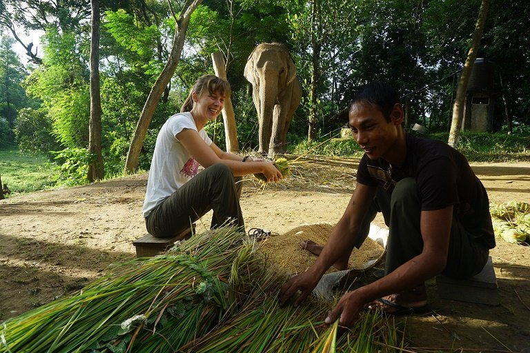 Spend time with a mahout and learn how to prepare elephant food