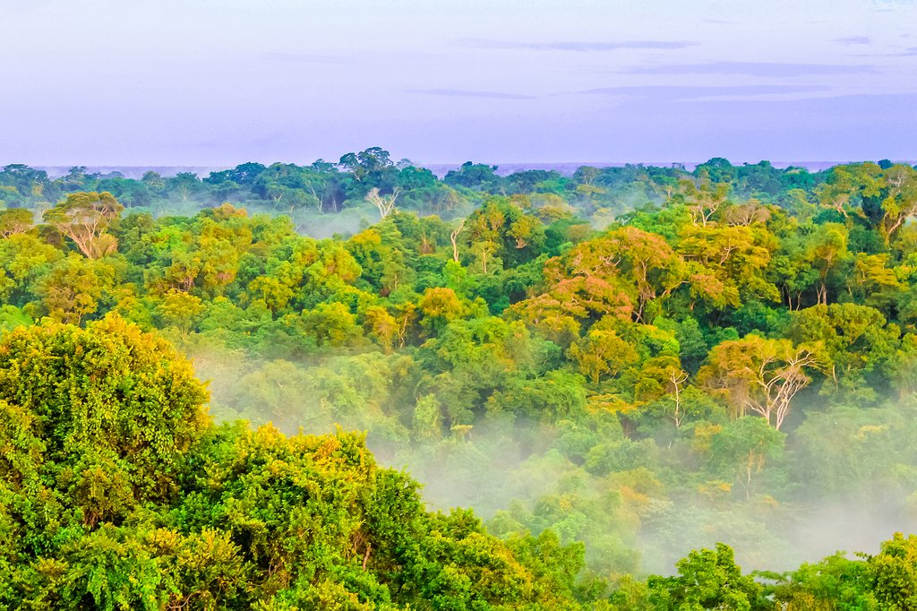 Morning fog hangs over the rainforest near Leticia