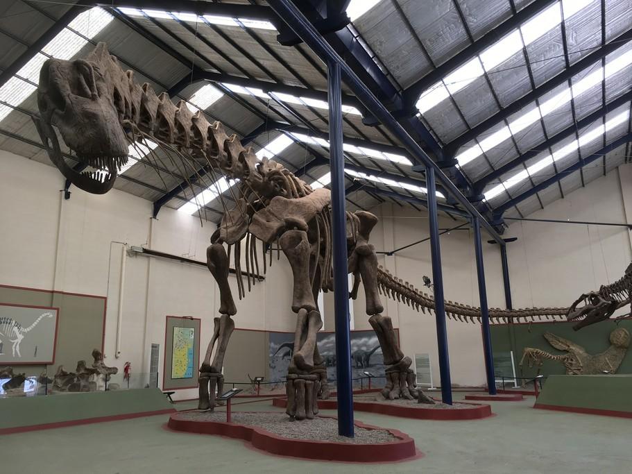 Reconstructed Argentinosaurus huinculensis skeleton