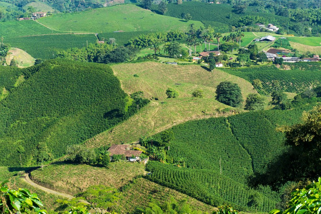 Coffee plantations near Manizales