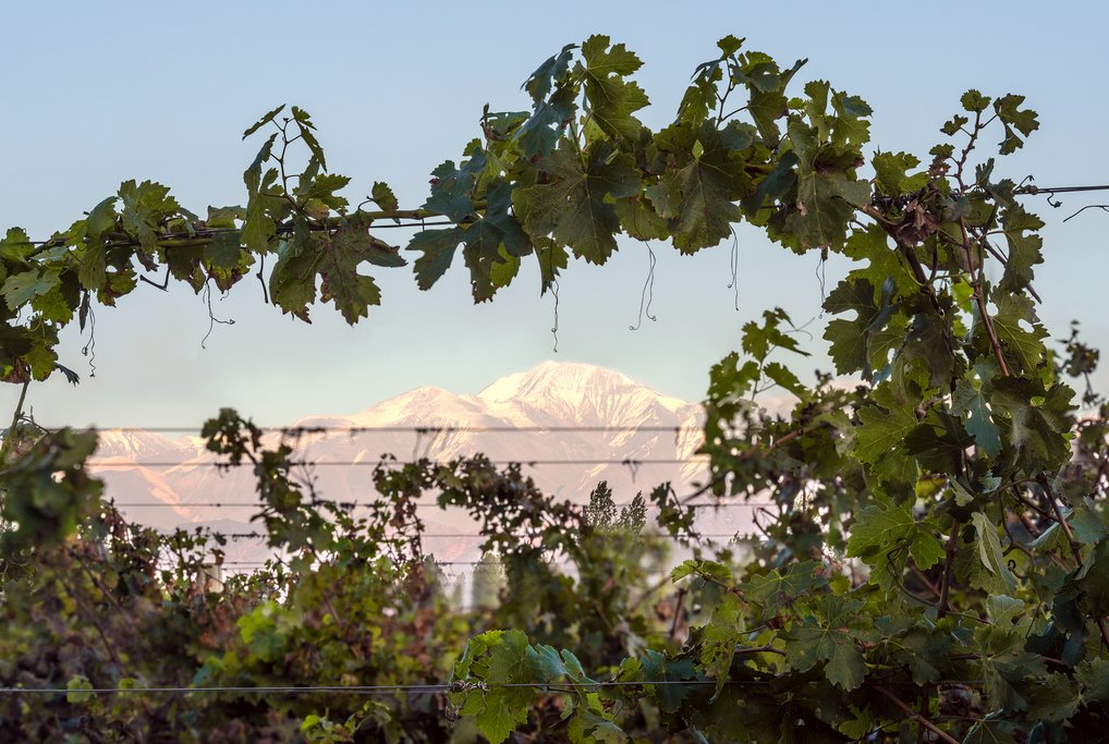 Aconcagua and Mendoza vineyard, Argentina