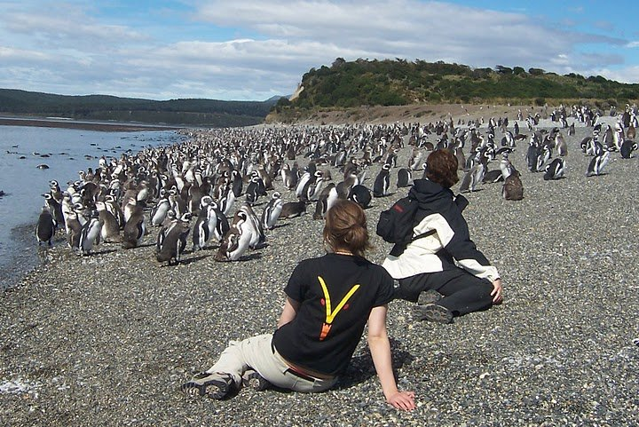 Penguin Colony off of Estancia Harberton