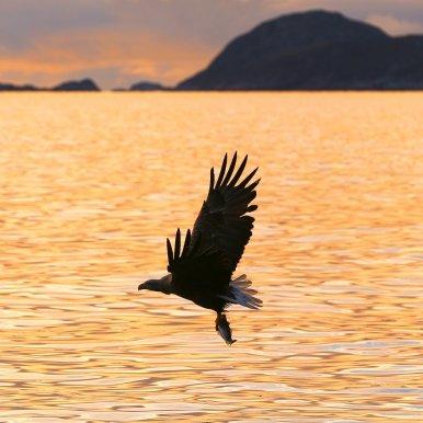 Wake up to a sunrise in Tromsø.