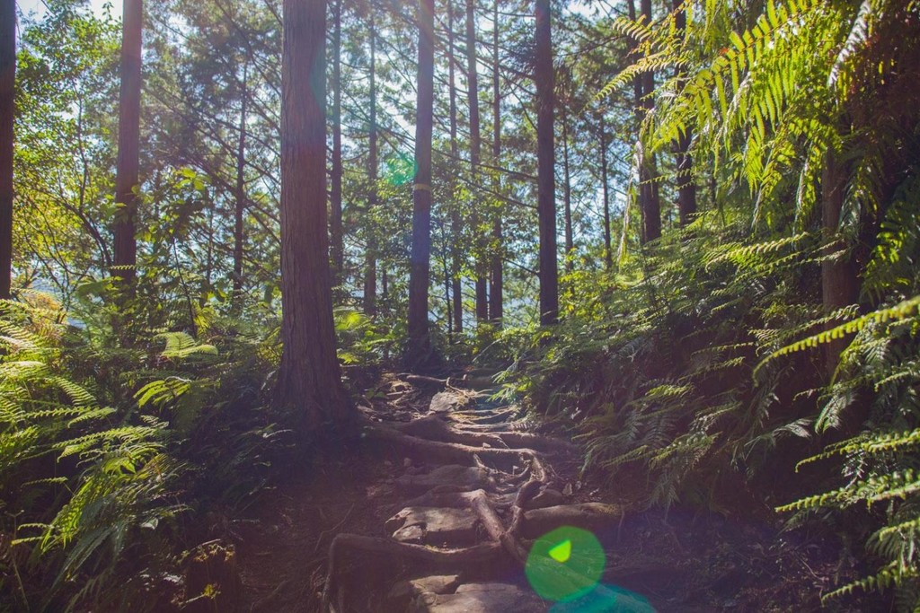 Winding mountain paths of the Kumano Kodo