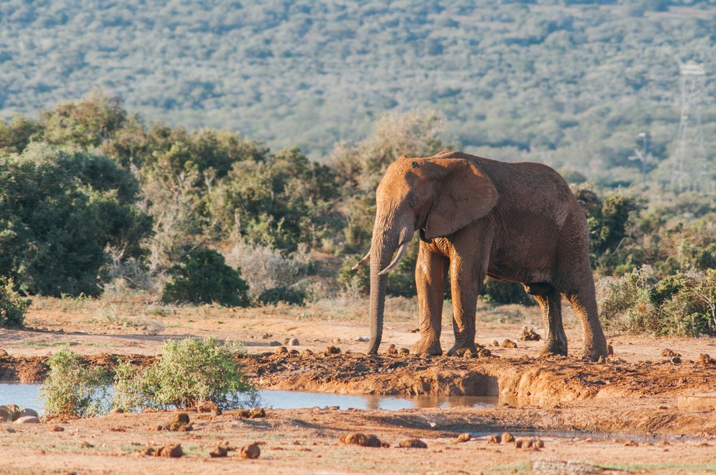 Up close with an elephant at Addo Elephant National Park