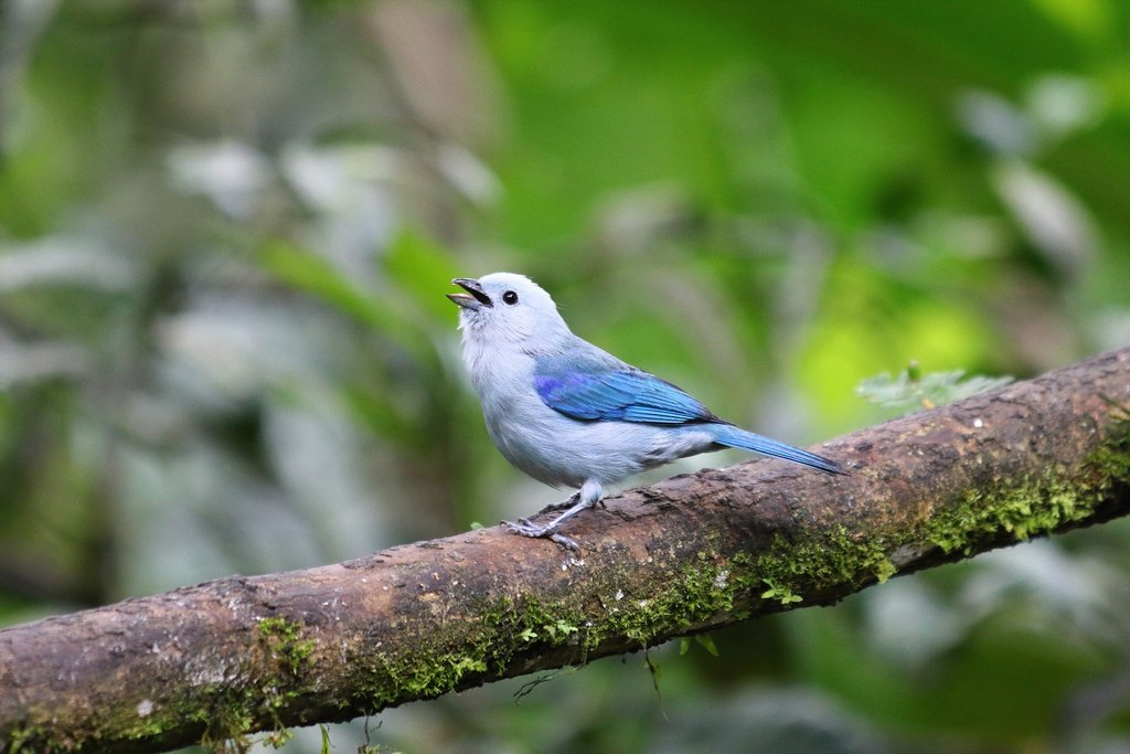 Ecuadorian cloud forest is known for its exotic bird populations