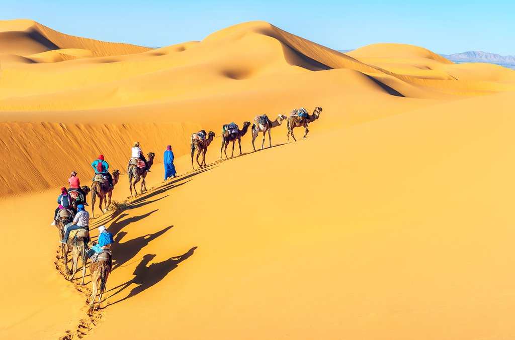 Camel trekking through the sand dunes of the Sahara