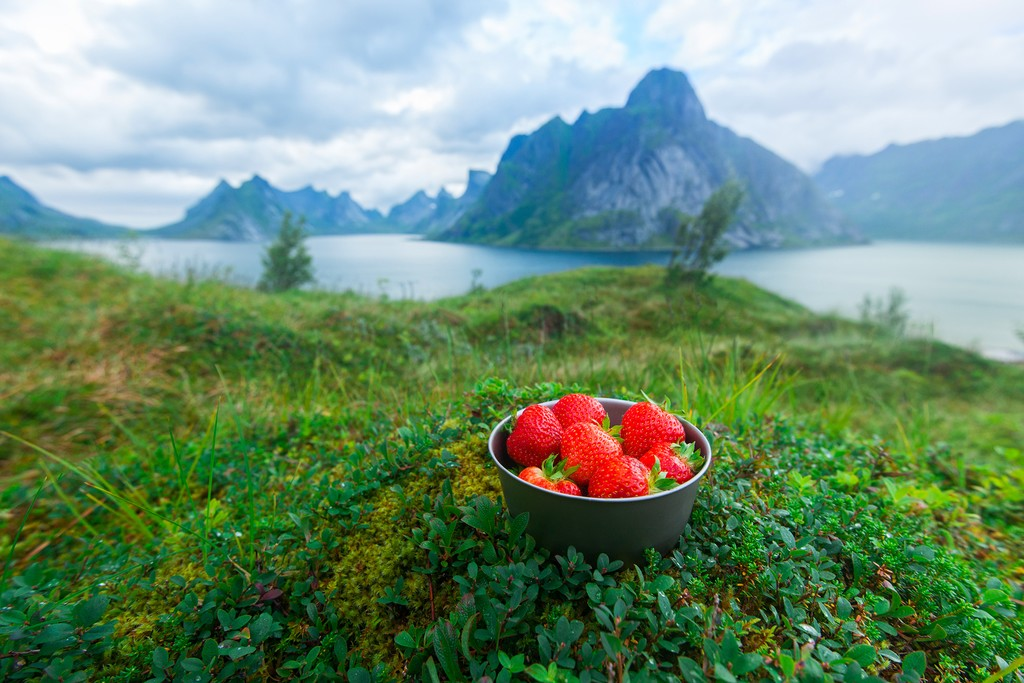 Norwegian strawberries