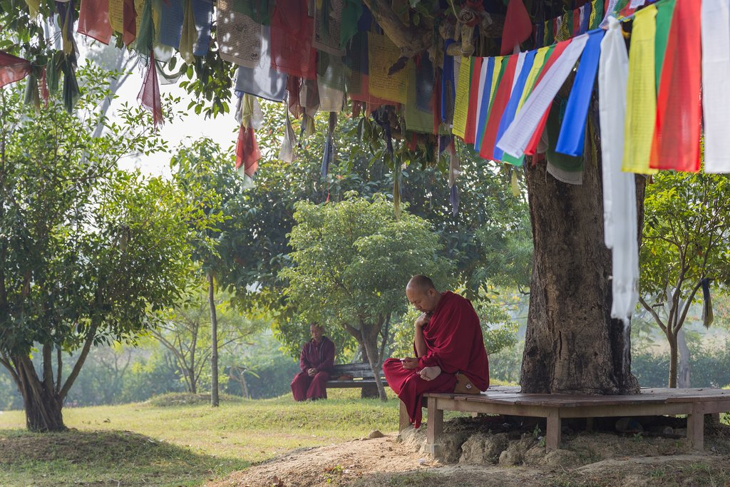 Monk sits under a tree, Lumbini, Nepal