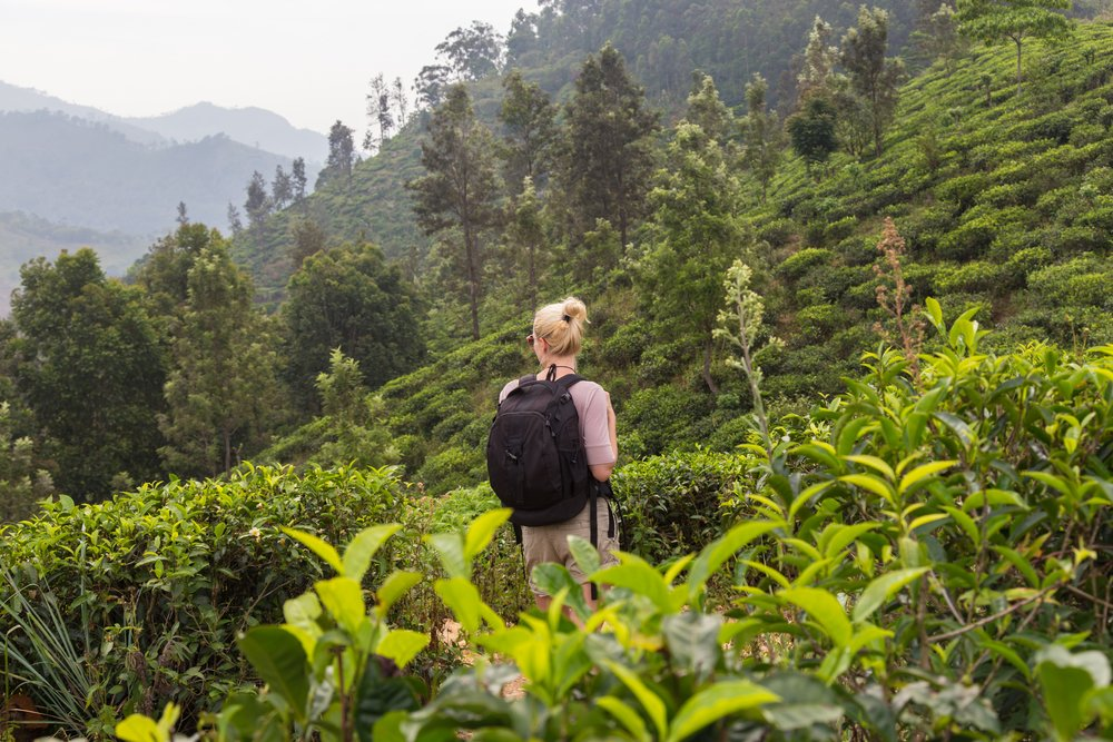 Hiking in tea country