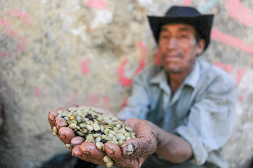 In northern Peru, a coffee farmer shows off handfuls of beans