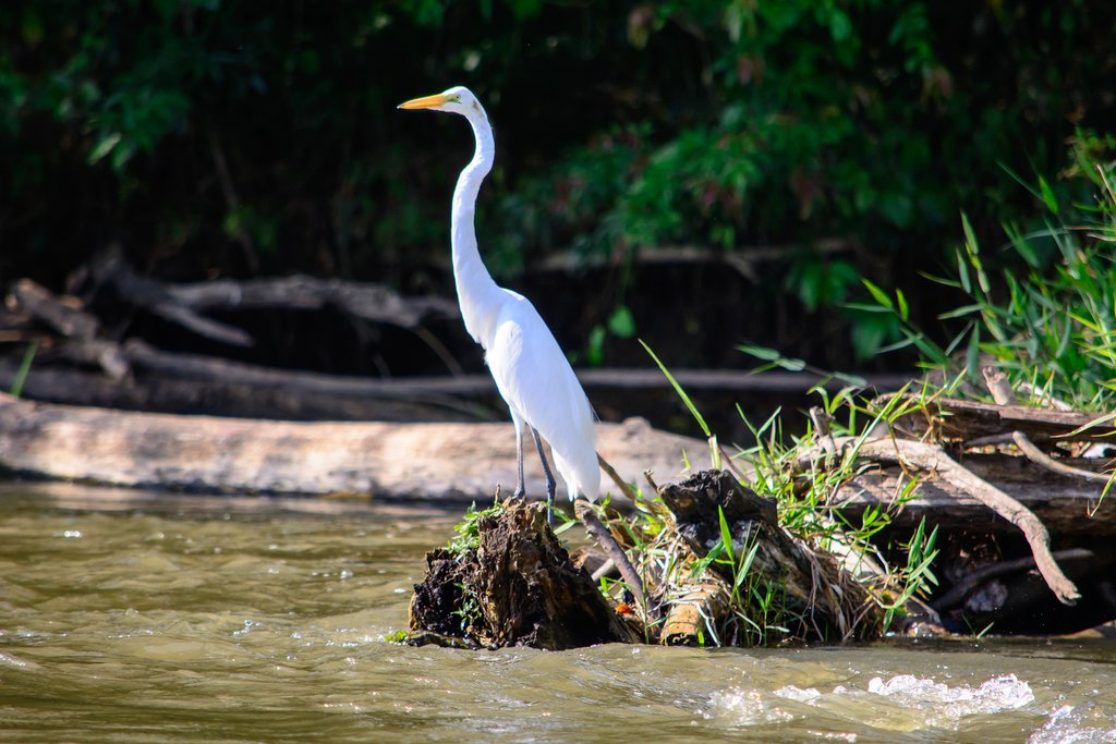 An egret perched on a log in the San Juan River