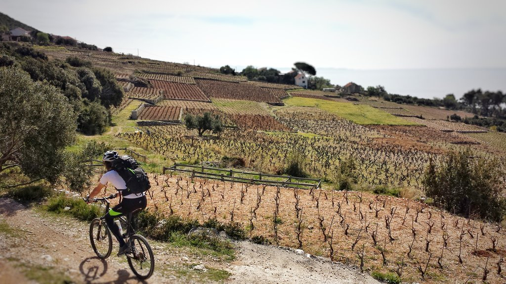 Cycling through Croatia's vineyards
