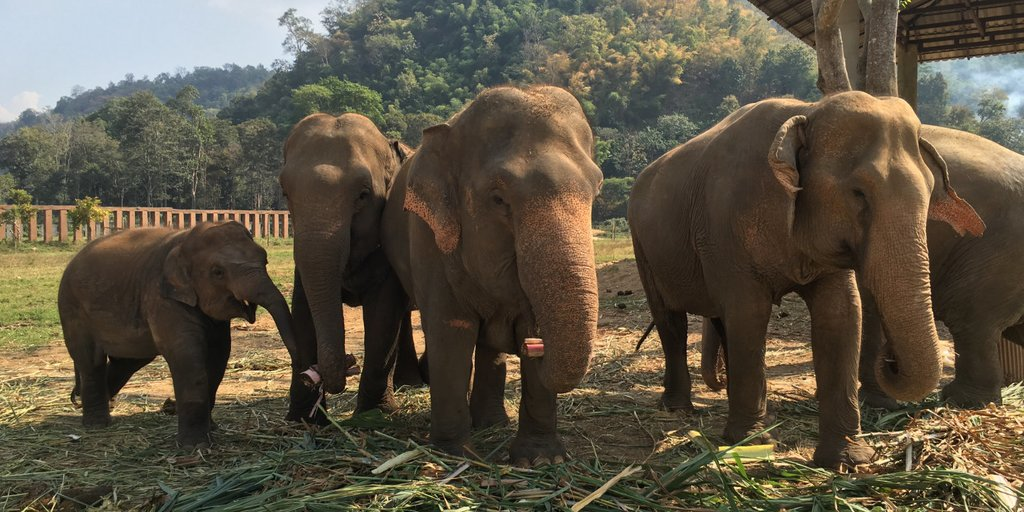 Bathe, feed, and play with adorable elephants