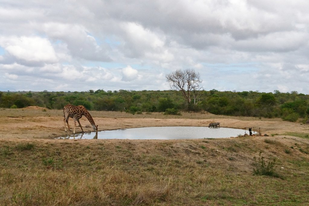View from the tent in Kruger National Park. Photo courtesy of Maria Yee.