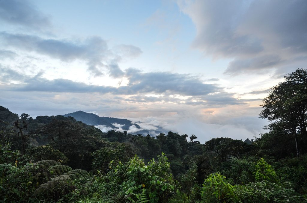 Enjoy great views of the cloud forest at Papallacta.