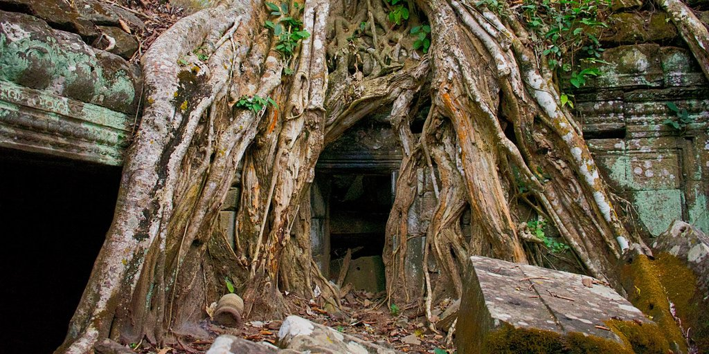 A tree grows out of the ruins at Ta Prohm in Angkor