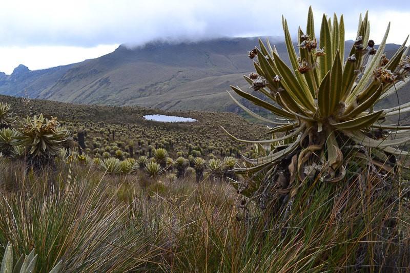 Views in Los Nevados National Park.