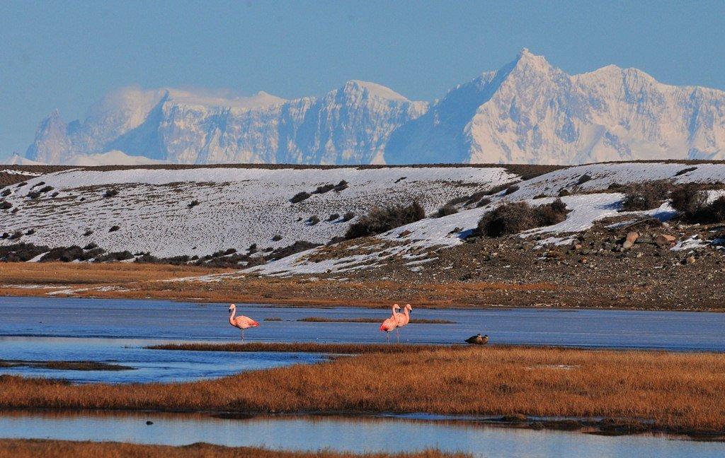 Flamingoes in El Chalten.