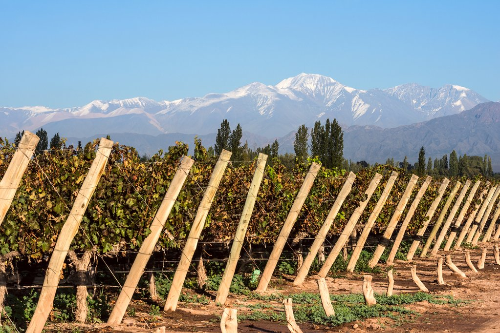 Vineyard, Mendoza, Argentina with Andes mountain range