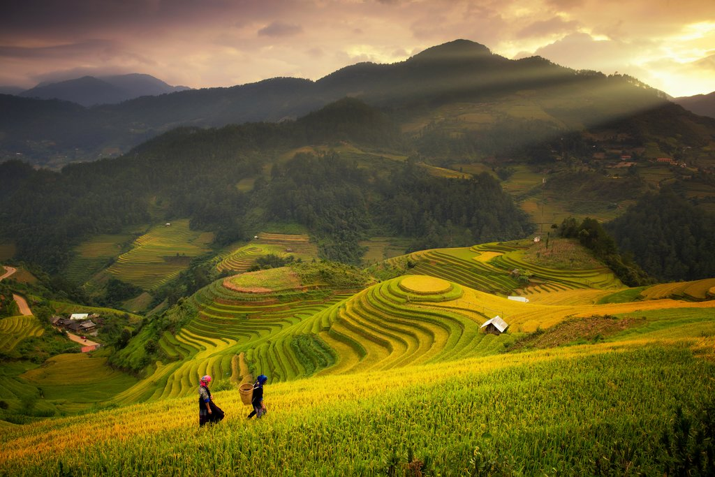 Terraced Rice Fields of Mu Cang Chai (Yen Bai)