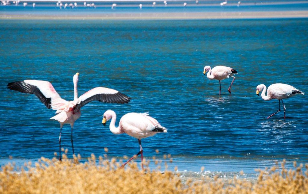 Flamingos at Eduardo Abaroa Reserve