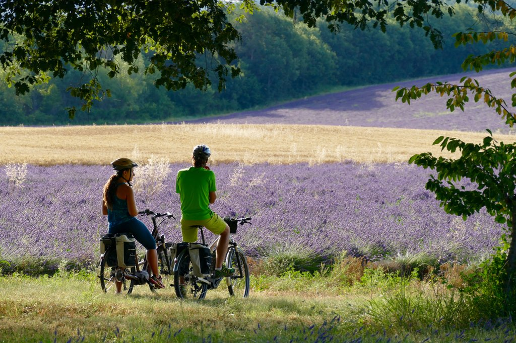 Cycling through the lavender fields of the Rhône Valley