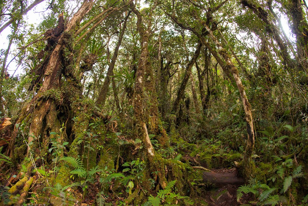 Moss forest along the trek