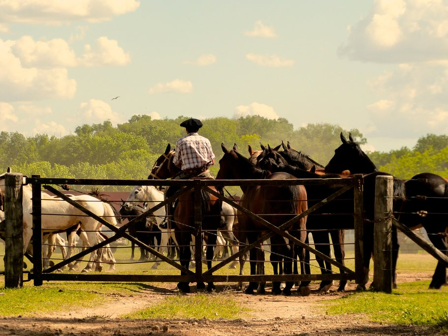 Horses on an estancia (ranch).