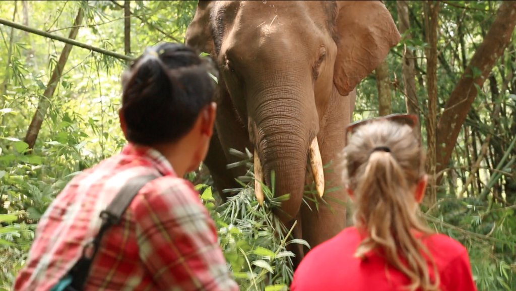 Hang out with elephants in the wild
