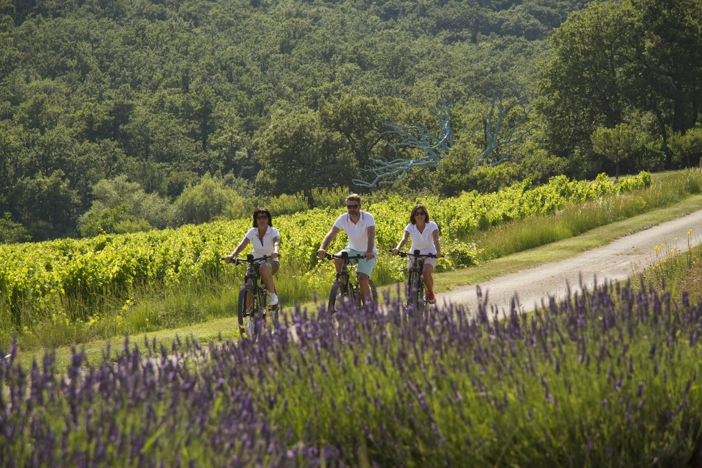 Cycling through lavender fields