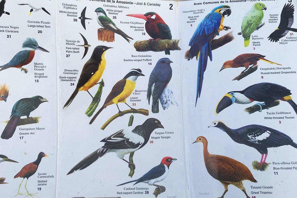 Bird species of the Amazon