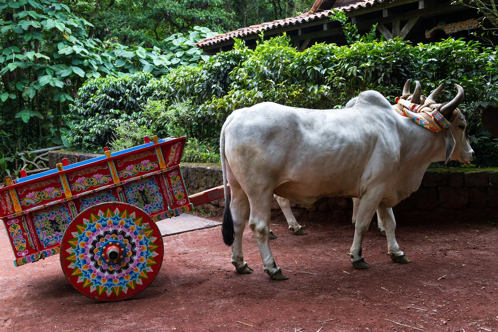 A festive hand-painted ox cart in Costa Rica.