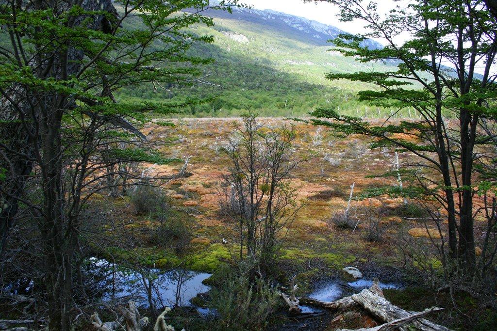 Nature in Ushuaia
