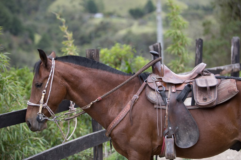 Salento by horseback