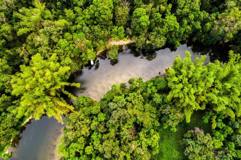 Transfer to the lush rainforest near Leticia.