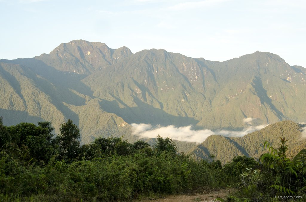 From our birding area, we will have excellent views ofPNN Tatamá.