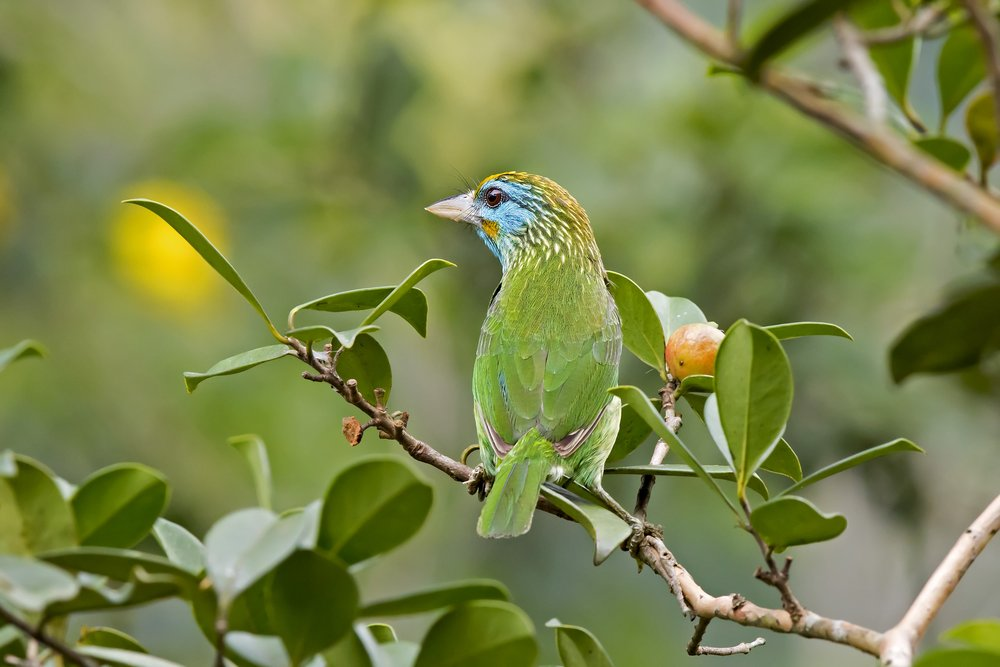 A bright rainforest bird