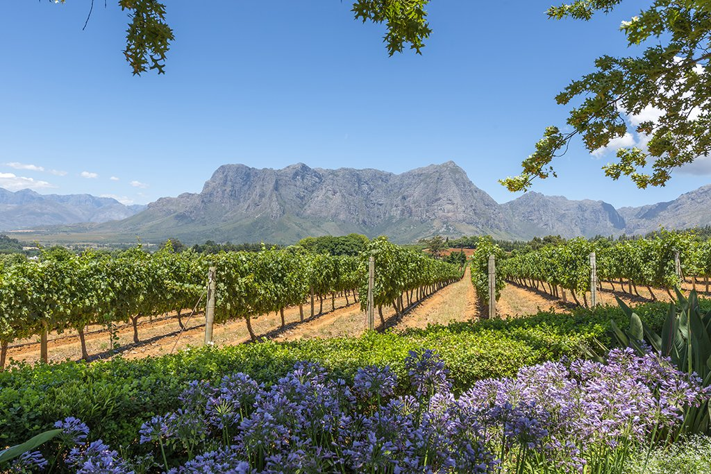 Cape Town wine lands