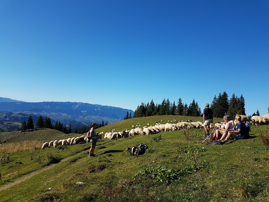 Taking a rest in the Bucegi Mountains