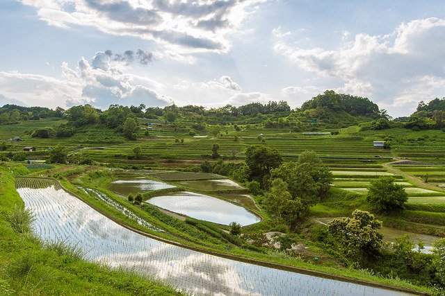 The terraced rice paddies of Asuka