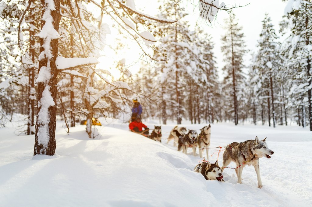Partake in dogsledding with a fleet of huskies.