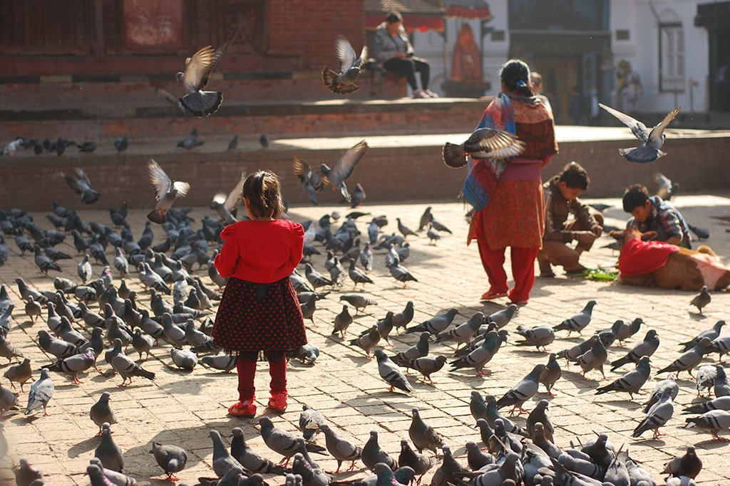 Pigeons in durbar square