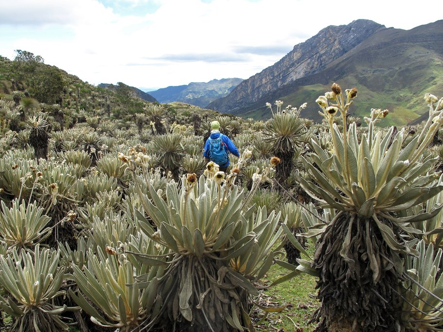 A hiker in El Cocuy.