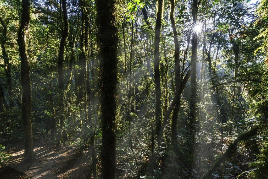 Forest of Chiang Mai