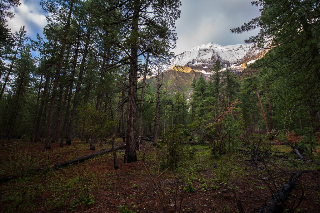 A forest in Dolpo